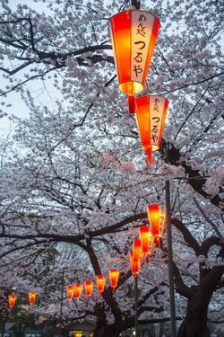 Red Lanterns Illuminating the Cherry Blossom in the Ueno Park, Tokyo, Japan, Asia by Michael Runkel
