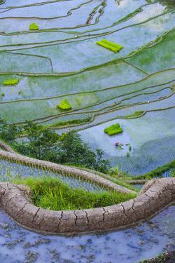 Rice Terraces of Banaue, Northern Luzon, Philippines by Michael Runkel