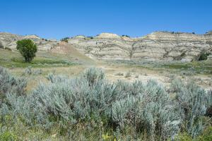 The Northern Part of the Roosevelt National Park by Michael Runkel