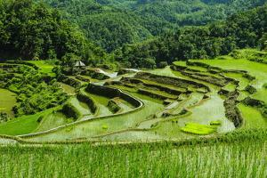 The Rice Terraces of Banaue, Northern Luzon, Philippines, Southeast Asia, Asia by Michael Runkel