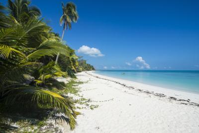 Turquoise waters and white sand beach, Ouvea, Loyalty Islands, New Caledonia, Pacific by Michael Runkel