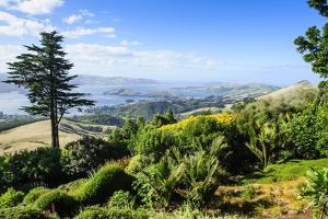 View from Larnach Castle over the Otago Peninsula, South Island, New Zealand, Pacific by Michael Runkel