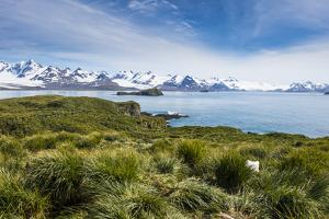 View over Prion Island, South Georgia, Antarctica, Polar Regions by Michael Runkel