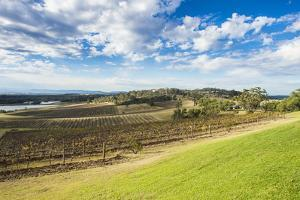 View over the wine region of the Hunter Valley, New South Wales, Australia, Pacific by Michael Runkel