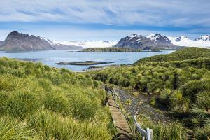 Walkway on Prion Island, South Georgia, Antarctica, Polar Regions by Michael Runkel