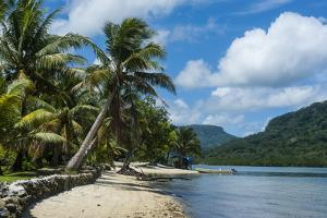 White Sand Beach with Palm Trees by Michael Runkel
