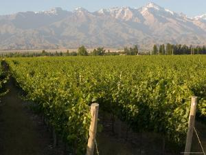 Vineyards in the Mendoza Valley with the Andes in the Background by Michael S. Lewis