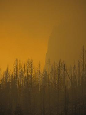 Haze Obscures Charred Pines During the 1988 Yellowstone Fires by Michael S. Quinton