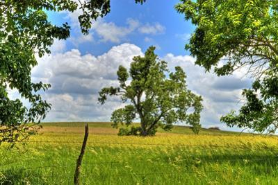 Framed Tree, Kansas, USA