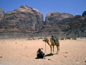 Camel, Wadi Rum, Jordan, Middle East by Michael Short