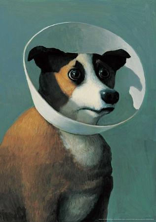 Dog with Cone by Michael Sowa