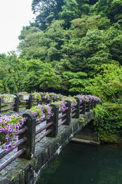 Stone Bridge with Flowers in Seogwipo by Michael