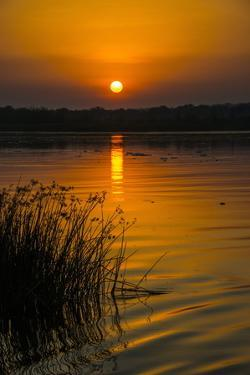 Sunrise over the Nile in the Murchison Falls National Park, Uganda, East Africa, Africa by Michael