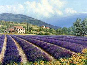 Fields Of Lavender by Michael Swanson