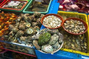 The Modern Fish Market in Busan, South Korea, Asia by Michael