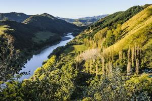 View over the Whanganui River in the Lush Green Countryside by Michael