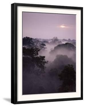 Dawn Over Canopy of Tai Forest, Cote D'Ivoire, West Africa by Michael W. Richards