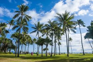 Waikiki Beach, Oahau, Hawaii, United States of America, Pacific by Michael