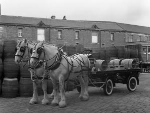 Tetley Shire Horses and Dray, Joshua Tetley Brewery, Leeds, West Yorkshire, 1966 by Michael Walters