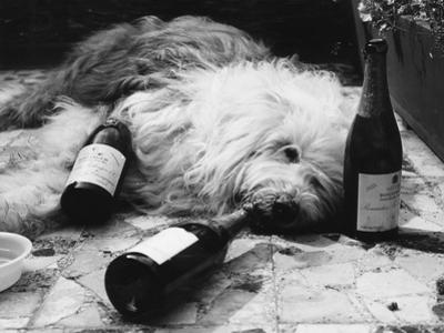 Dulux Dog Drunk