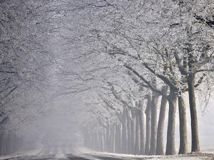 Icy Road, Avenue with Hoarfrost, Stuttgart, Baden-Wuerttemberg, Germany by Michael Weber