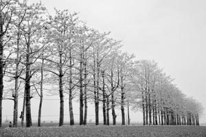Trees in Row by michaeliao27