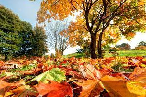 Autumn, Fall Landscape in Park. Colorful Leaves, Sunny Blue Sky. by Michal Bednarek