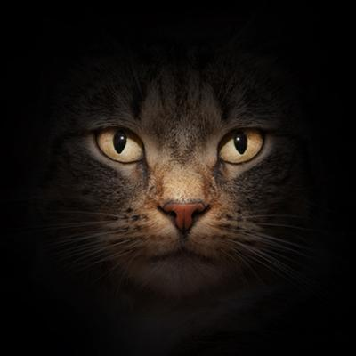 Cat Face With Beautiful Eyes Close Up Portrait by Michal Bednarek