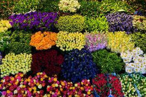 Colorful Flowers in a Florist's. Gardening, Spring, Nature Background by Michal Bednarek