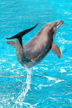 Dolphin Plays In Pool by Michal Bednarek