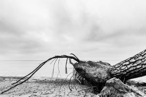 Fallen Tree on the Beach after Storm. Sea on a Cloudy Day. Black and White, far Horizon. by Michal Bednarek