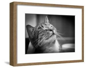 Happy Smiling Cat Portrait In Black And White by Michal Bednarek