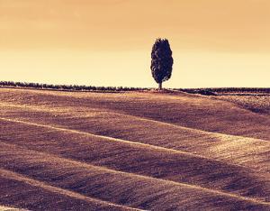 Harvest Season in Tuscany by Michal Bednarek