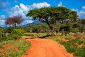 Red Ground Road and Bush with Savanna Landscape in Africa. Tsavo West, Kenya. by Michal Bednarek