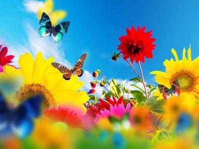 Sunny Garden Of Flowers And Butterflies. Colors Of Spring And Summer