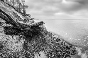 Wild Beach with Fallen Tree and Cliffs on a Winter, Cloudy Day. Waves on the Sea. Black and White. by Michal Bednarek