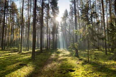 Ray of Light on a Path in Forest by Michal Mierzejewski