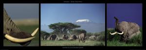 Elephants and Kilimanjaro by Michel & Christine Denis-Huot