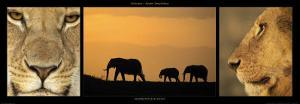 Elephants and Lions by Michel & Christine Denis-Huot