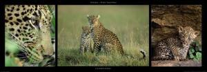 Leopard Family by Michel & Christine Denis-Huot