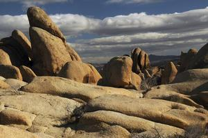 Arch Rock Trail, Joshua Tree National Park, California, USA by Michel Hersen