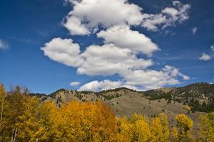 Aspens, Evergreens, Boulder Mountains, Autumn, Sawtooth NF, Idaho, USA by Michel Hersen