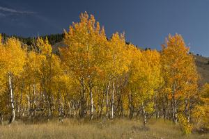 Autumn Colors, Boulder Mountains, Sawtooth National Forest, Idaho, USA by Michel Hersen