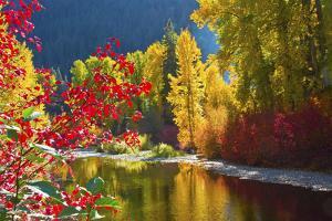 Autumn foliage, Nason Creek Area, Wenatchee National Forest, Washington State, USA by Michel Hersen