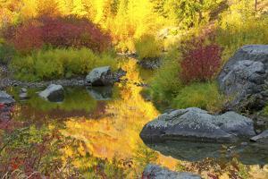 Autumn foliage, Tumwater Canyon, Wenatchee National Forest, WA. by Michel Hersen
