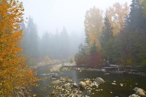 Autumn, Nason Creek in fog, Wenatchee National Forest, WA. by Michel Hersen