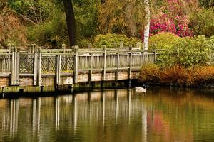 Bridge, Crystal Springs Lake, Rhododendron Garden, Portland, Oregon by Michel Hersen