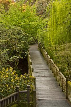 Bridge, Crystal Springs Rhododendron Garden, Portland, Oregon, USA by Michel Hersen