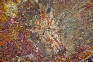 Close-up of petrified logs, Petrified Forest National Park, Holbrook, Arizona, USA. by Michel Hersen