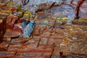 Close-up of petrified wood, Petrified Forest National Park, Holbrook, Arizona, USA. by Michel Hersen